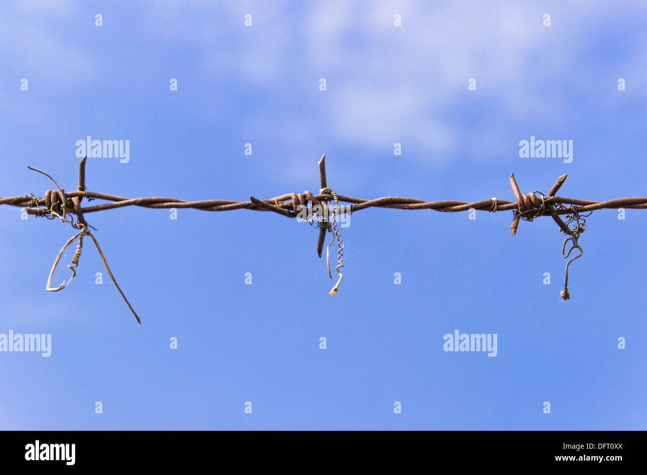 Barbed wire and blue sky - Stock Image