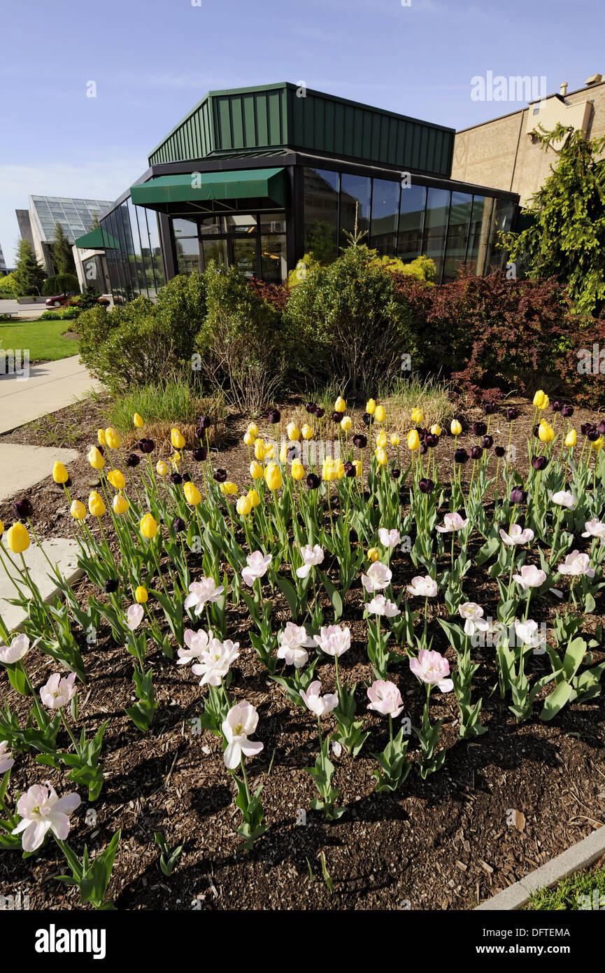 Foellinger Freimann Botanical Conservatory Of Fort Wayne Indiana   Stock  Image