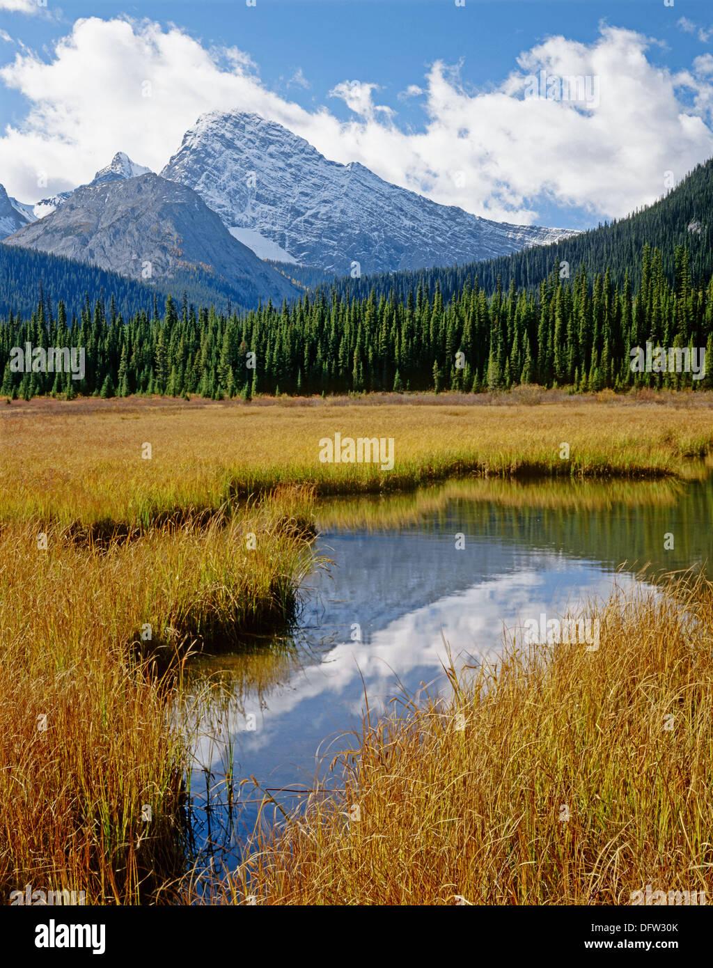 Commonwealth Peak from wetlands of Smuts Creek. Kananaskis Country, Alberta, Canada - Stock Image