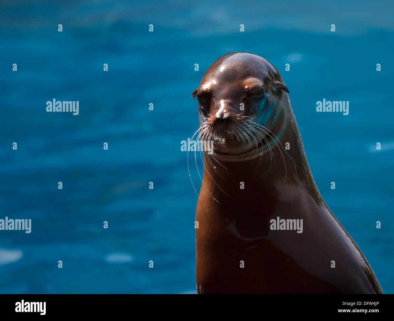 Seal Show Aquarium Stock Photos & Seal Show Aquarium Stock ...