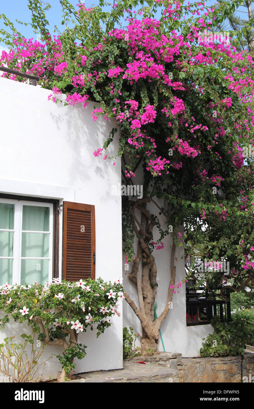 Greek Landscape With House And A Pink Flowering Bush Stock Photo