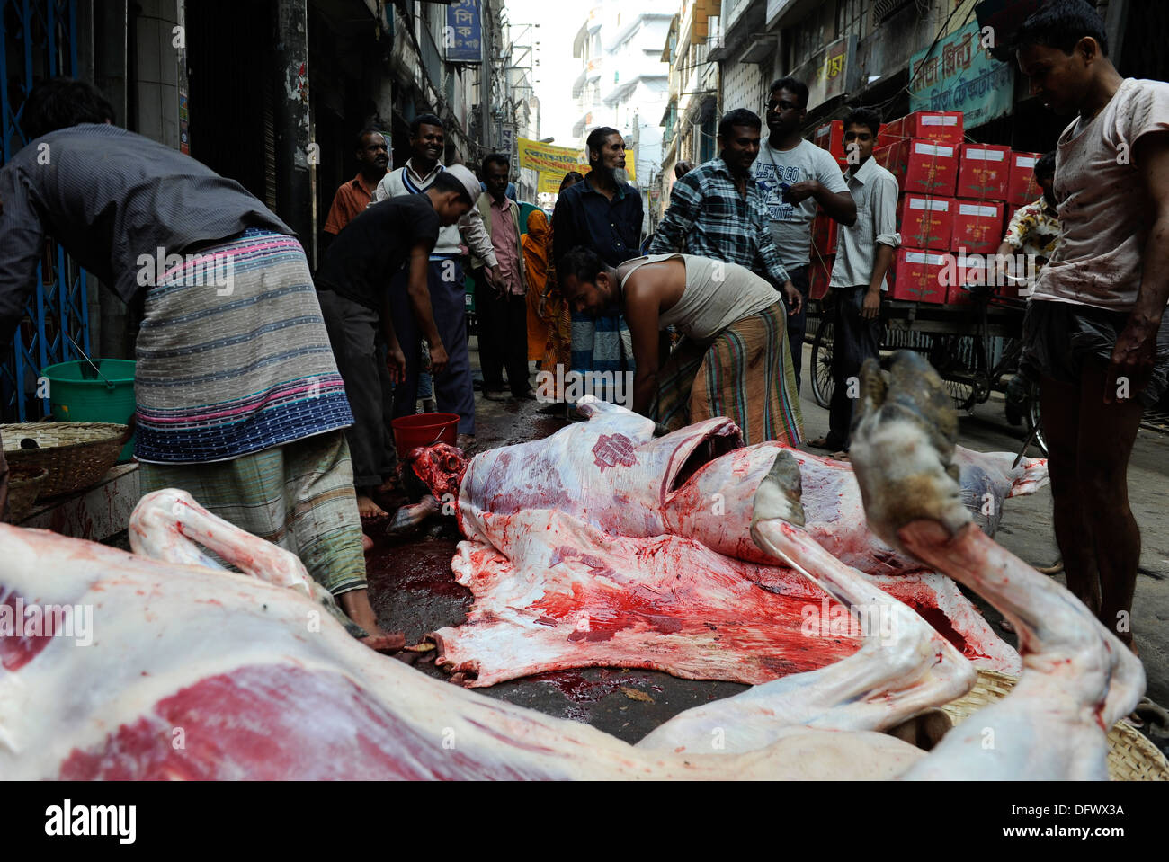 BANGLADESH Dhaka, Islamic Festival of Sacrifice Eid al-Adha, muslims slaughter animals on the road and distribute the meat - Stock Image