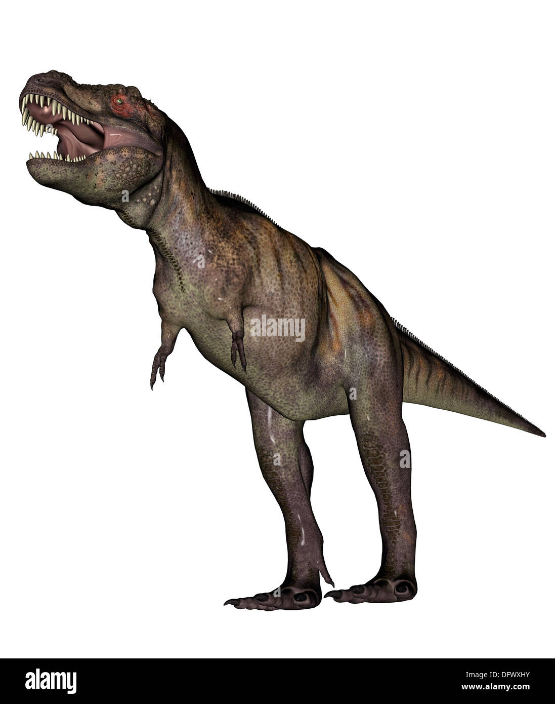 Aggressive Tyrannosaurus Rex growling, white background. - Stock Image