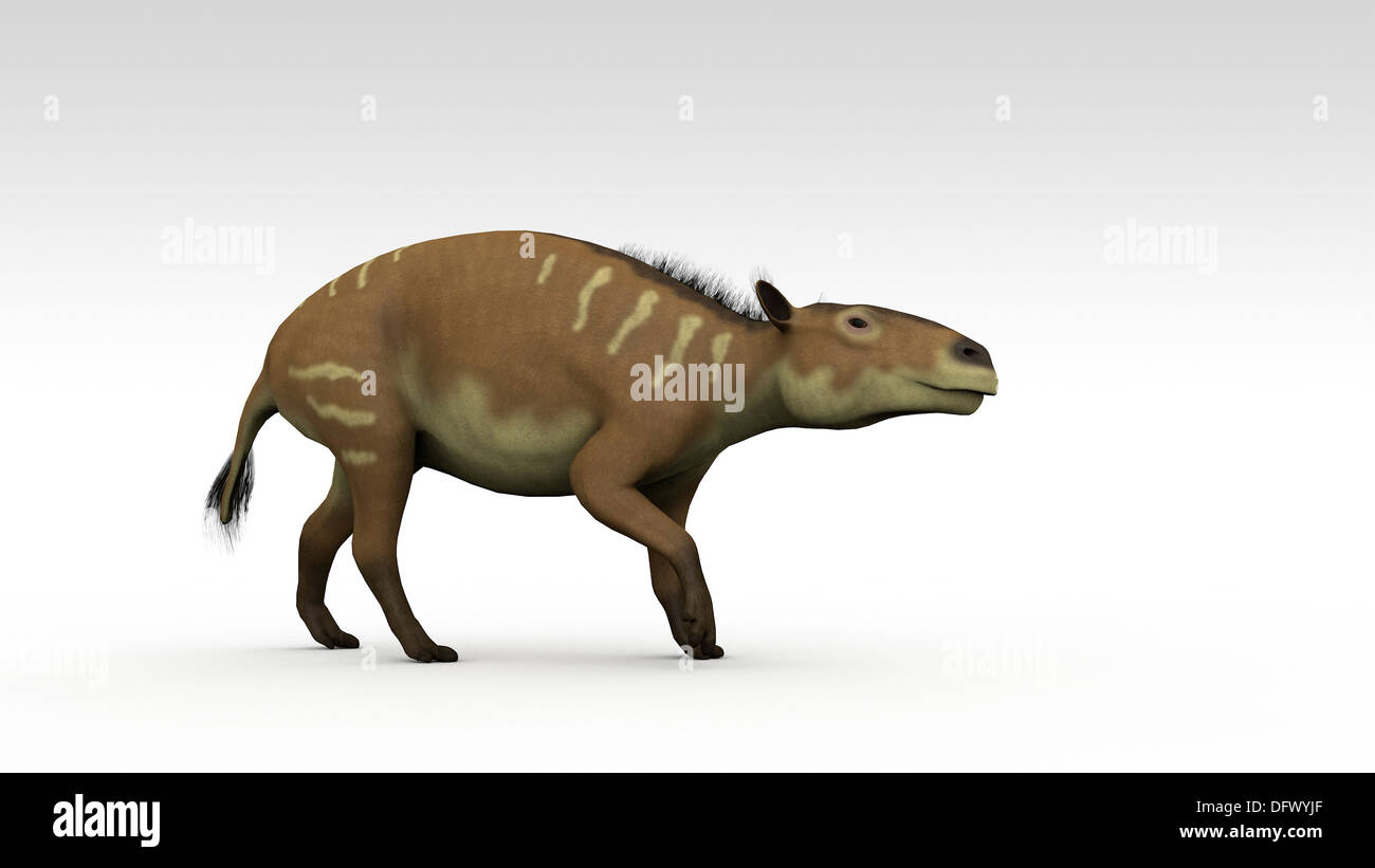 Eurohippus, an extinct genus of equid ungulate, white background. - Stock Image