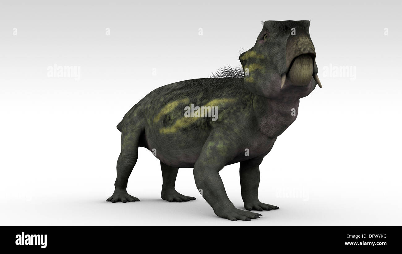 Lystrosaurus, a dicynodont therapsid from the Late Permian and Early Triassic period. - Stock Image