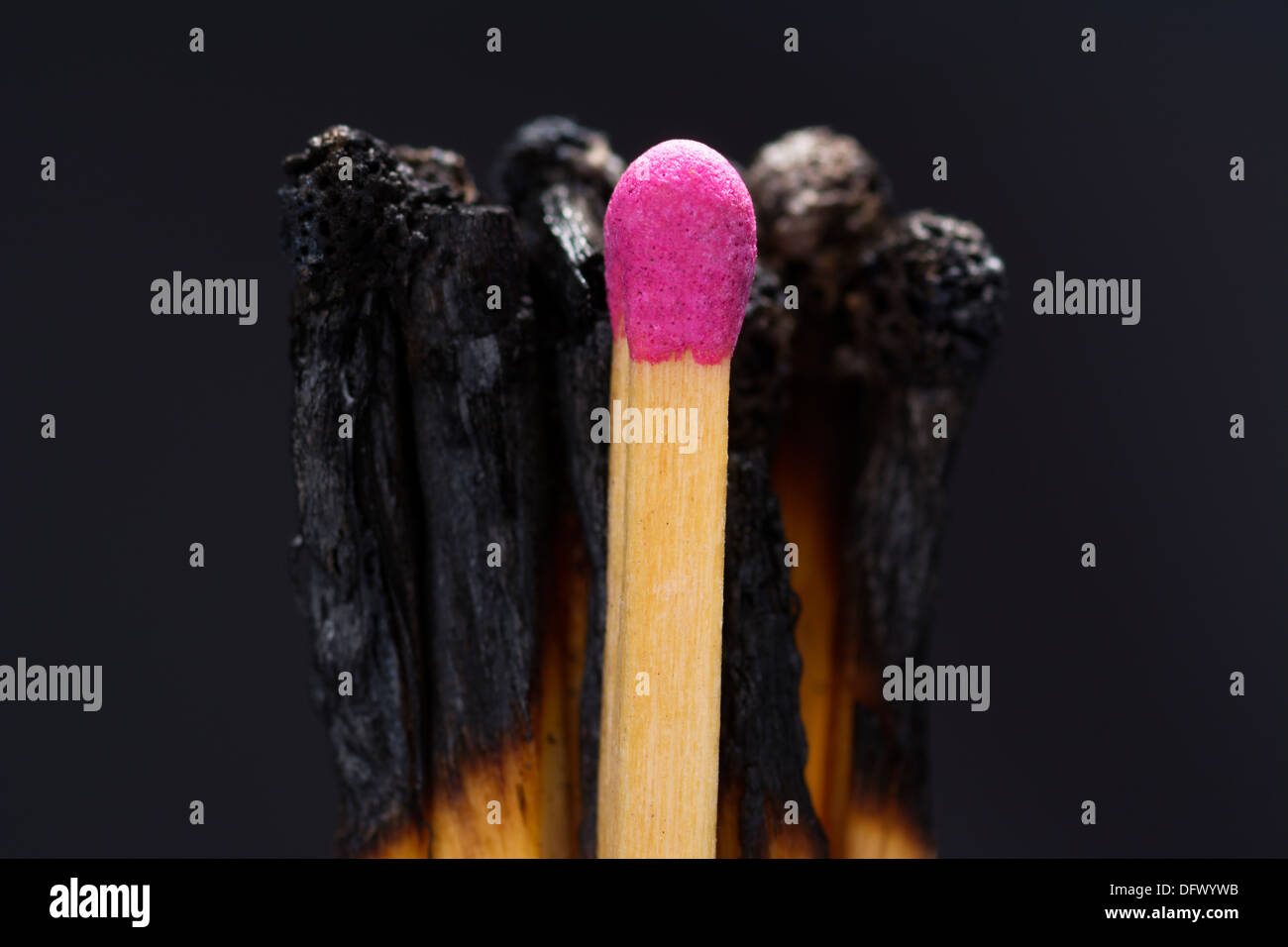 Concept photo showing burned out matches with one untouched one illustrating the burned out and leadership business - Stock Image