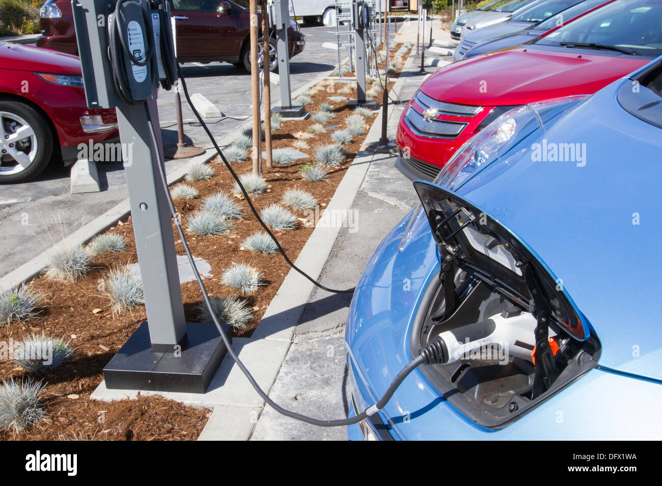 Plug-in electric cars plugged into an EV charging station to charge their batteries in a workplace parking lot - Stock Image