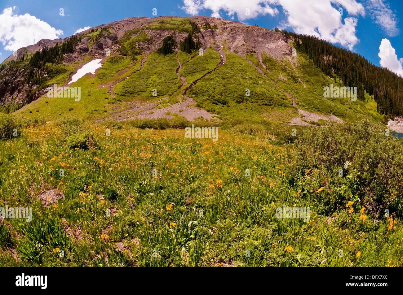 Wildflowers, Emerald Lake, near Crested Butte, Colorado USA - Stock Image