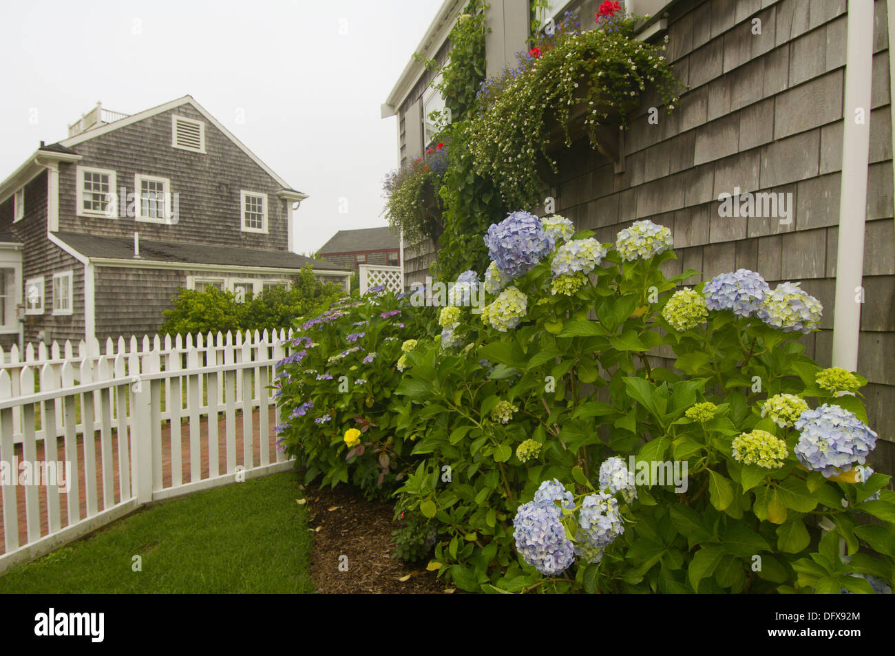 Flower Gardens, Nantucket Town, Nantucket Island, Massachusetts, USA