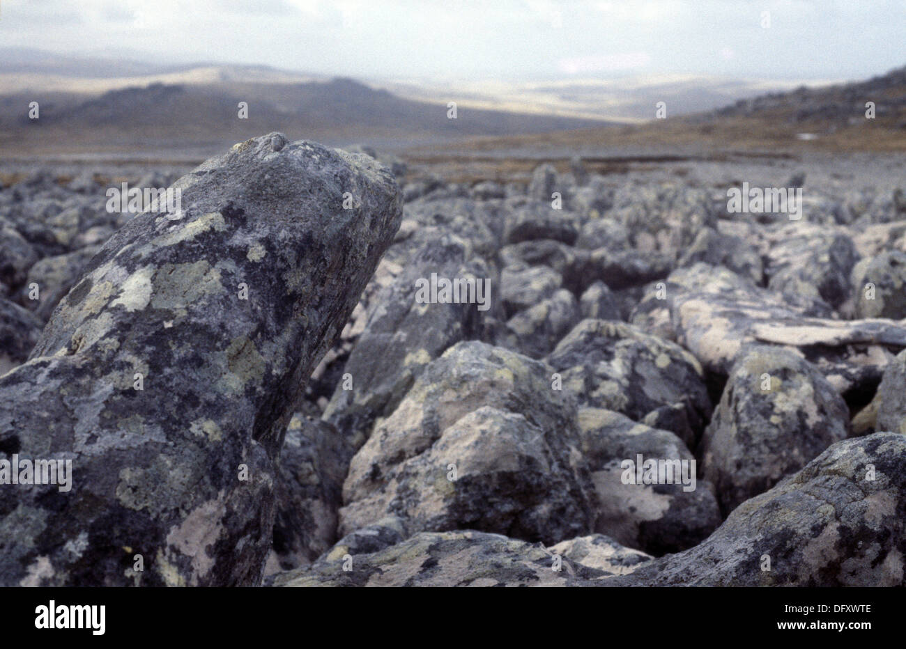 Rock flow on the Falkland Islands Stock Photo
