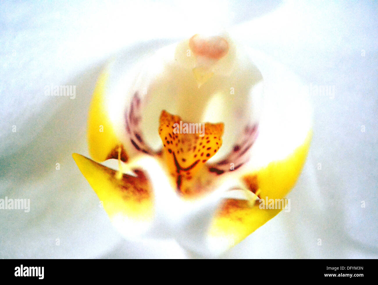 Orchid Anatomy Stock Photos & Orchid Anatomy Stock Images - Alamy