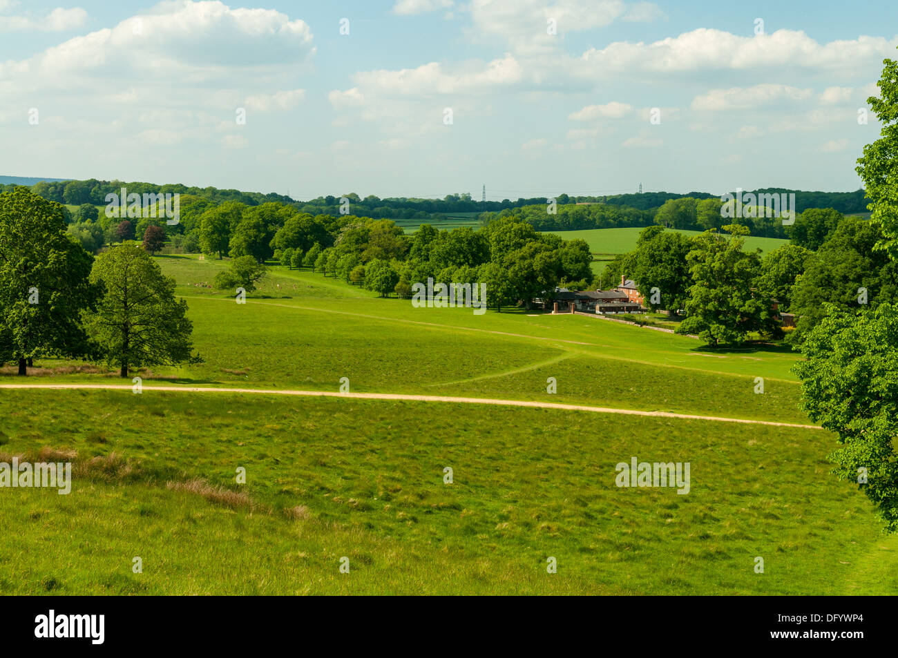 Petworth Park, Petworth, West Sussex, England - Stock Image