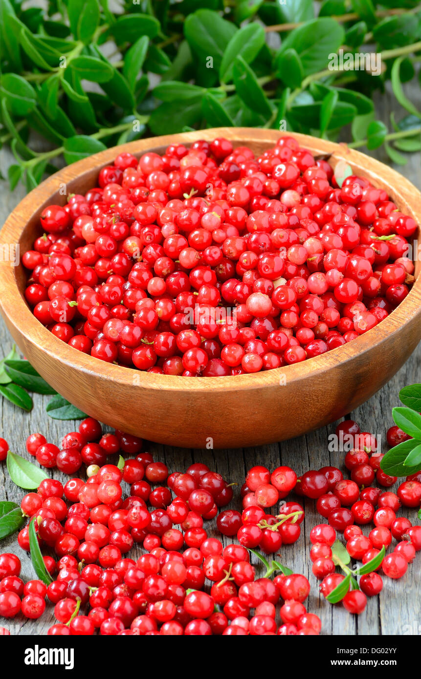 Cowberries in brown bowl on wooden table - Stock Image