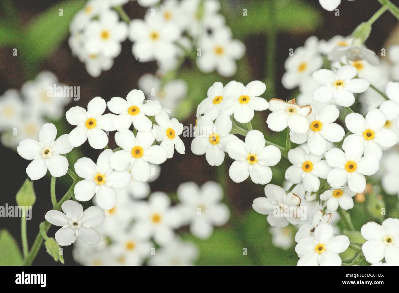 Fragile Blossoms Stock Photos Fragile Blossoms Stock Images Alamy