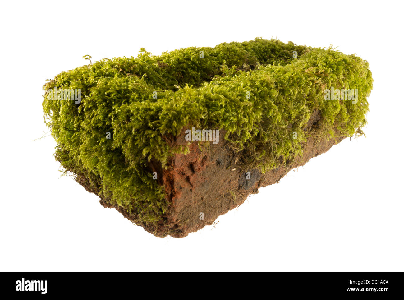 brick covered in moss - Stock Image