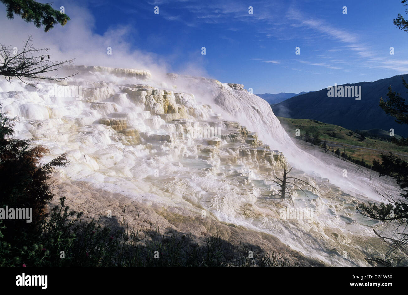 Elk265-1890 Wyoming, Yellowstone National Park, Mammoth Hot Springs, Canary Spring - Stock Image