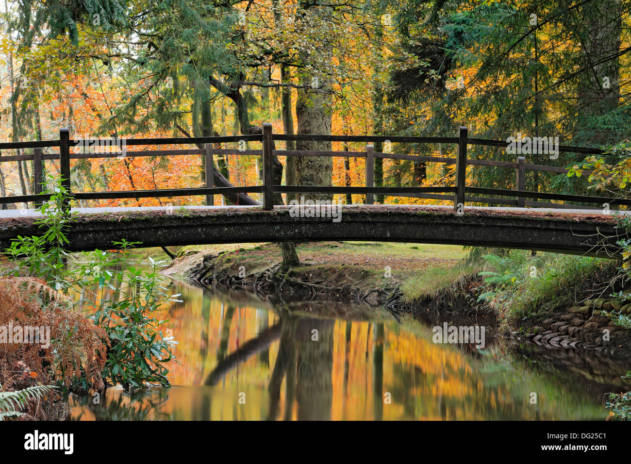 Autumn reflections, the Bridge at Black Water, New Forest,Hampshire - Stock Image
