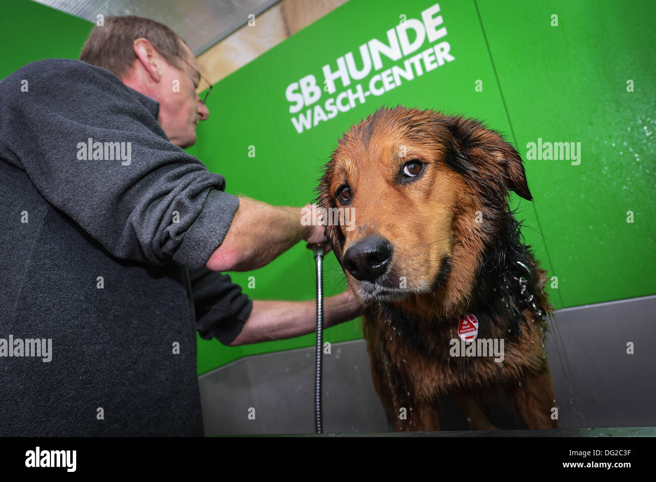 Nuremberg, Germany. 12th Oct, 2013. Mut Benny is washed by his owner at an SB Dog Washing Center outside of of a Stock Photo