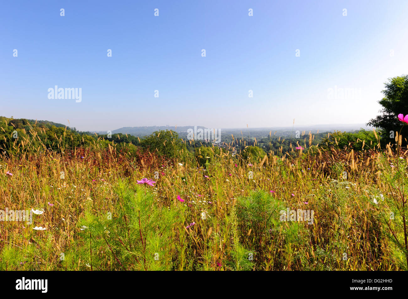 Wild Flowers, France - Stock Image