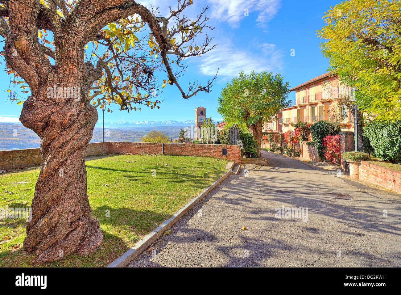Tree with yellow leaves and old trunk grows in the street in small town of Santa Vittoria D'Alba in Piedmont, Northern Italy. - Stock Image