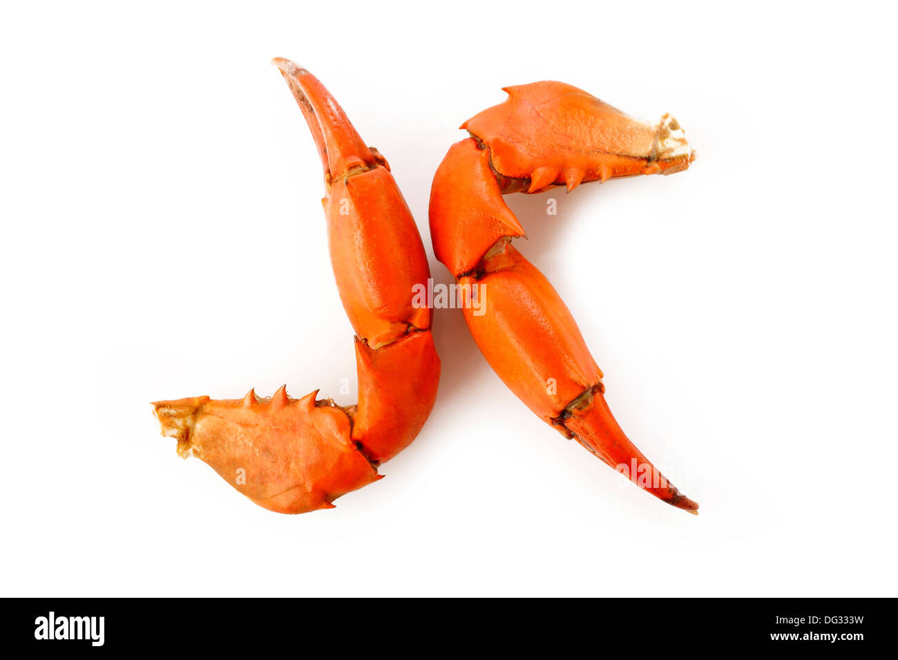 Boiled crab claw on white background - Stock Image