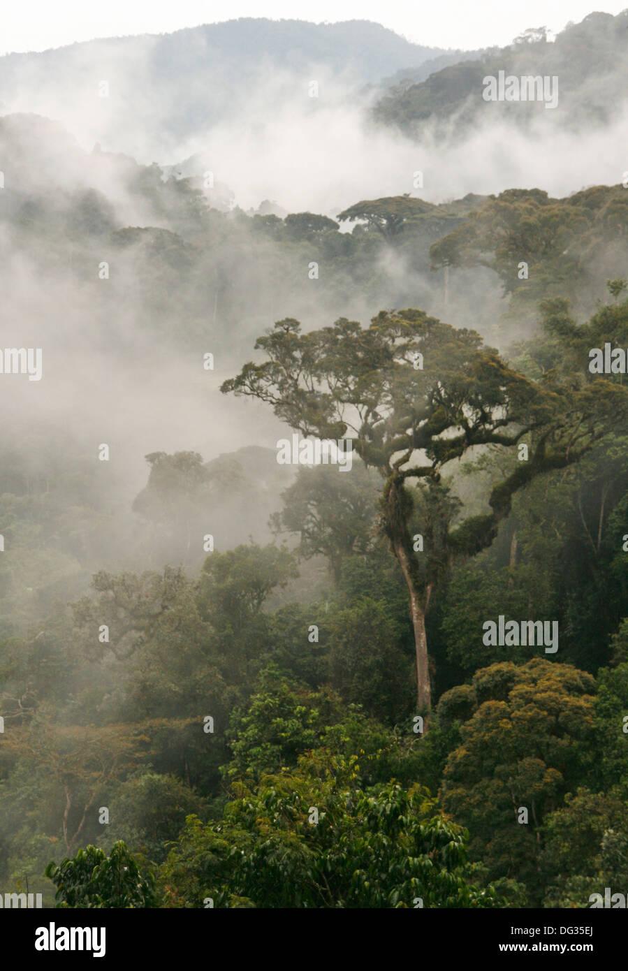 Morning mist in Nyungwe Forest National Park, near Bweyeye, Rwanda - Stock Image
