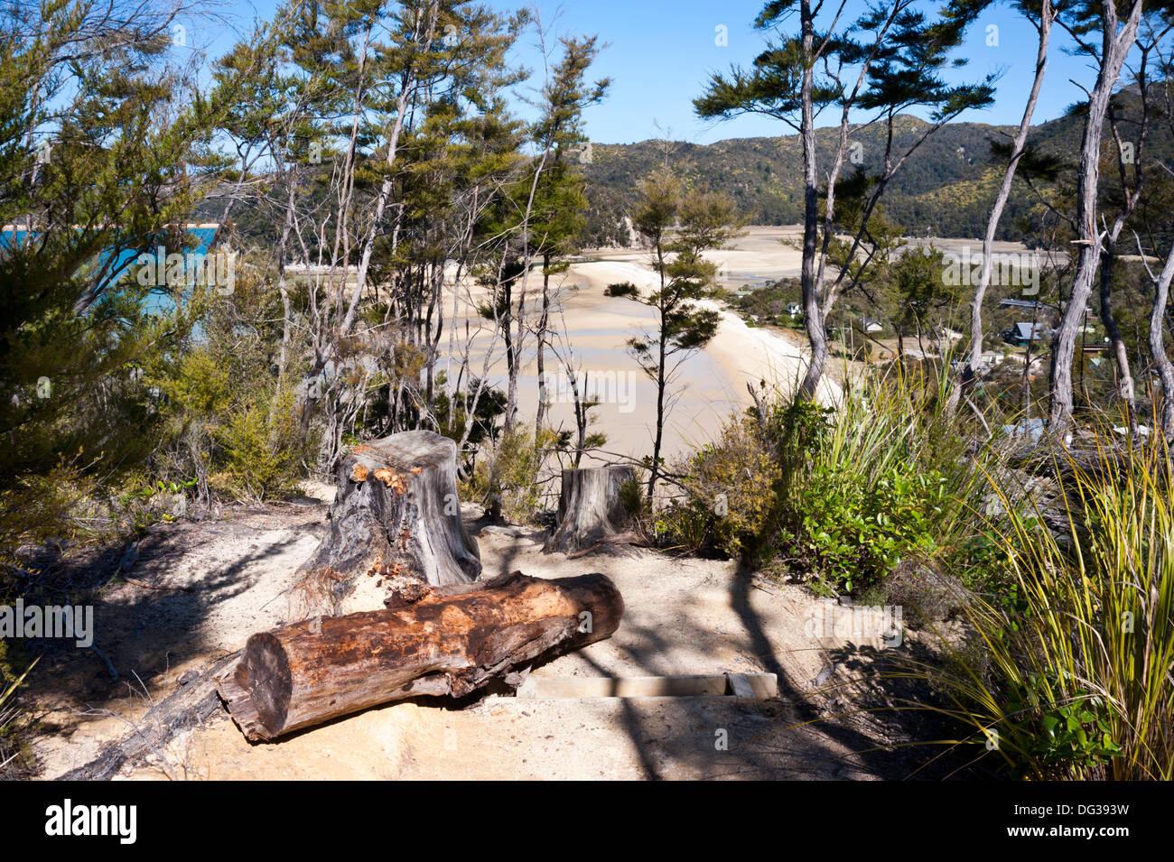 Abel Tasman National Park, New Zealand. The Abel Tasman Coastal Track at Torrent Bay. - Stock Image