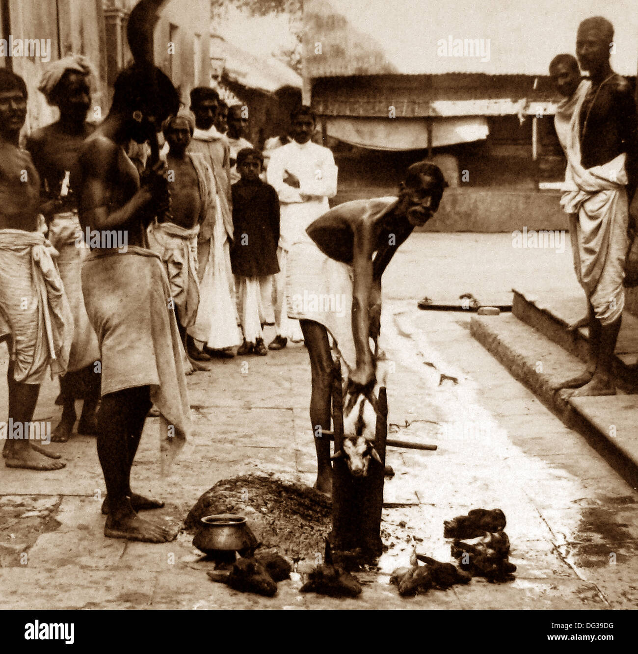 India - Calcutta - Sacrificing a goat early 1900s - Stock Image