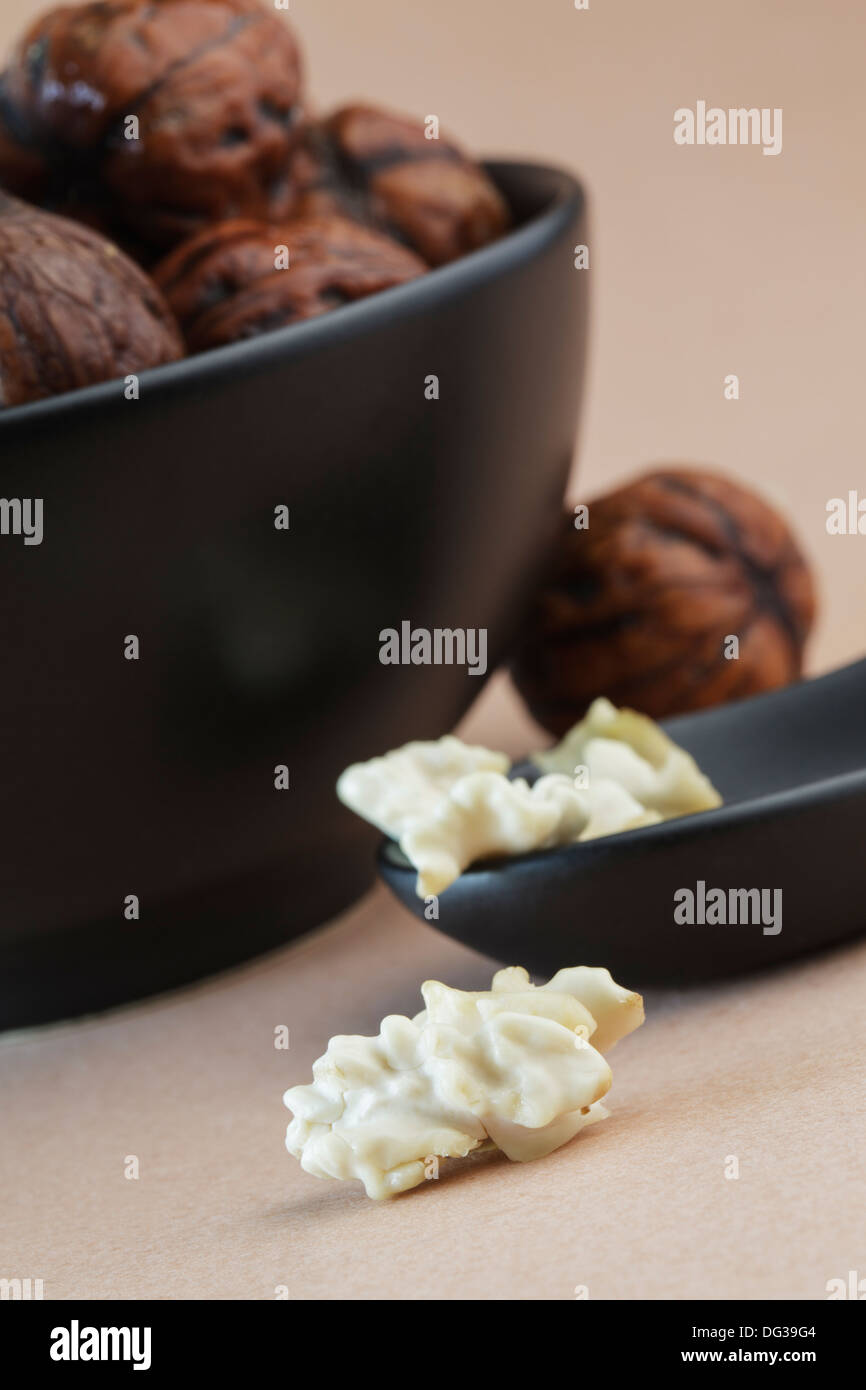 Fresh picked, still wet walnuts with there creamy soft kernels - Stock Image
