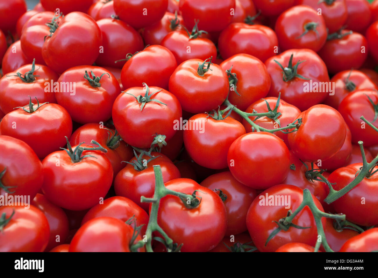 Tomato stall in the marketplace, Hanover, Lower Saxony, Germany, Europe, - Stock Image