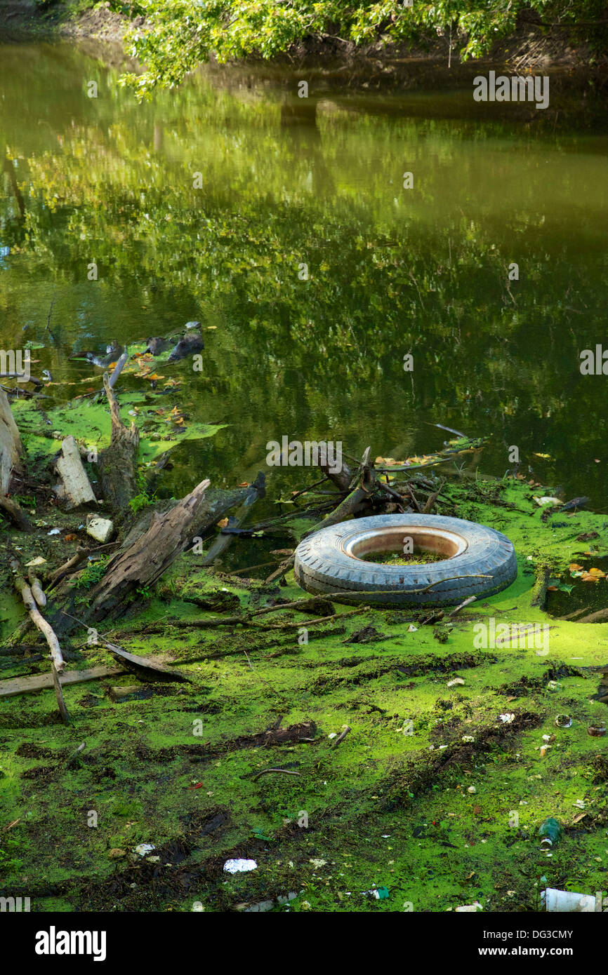 Floating debris on the Des Plaines River. Cook County, Illinois Stock Photo