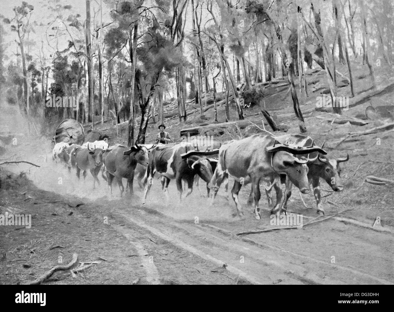 This illustration in the London-based Penrose Pictorial Annual of 1900 shows timber hauling in West Australia. - Stock Image