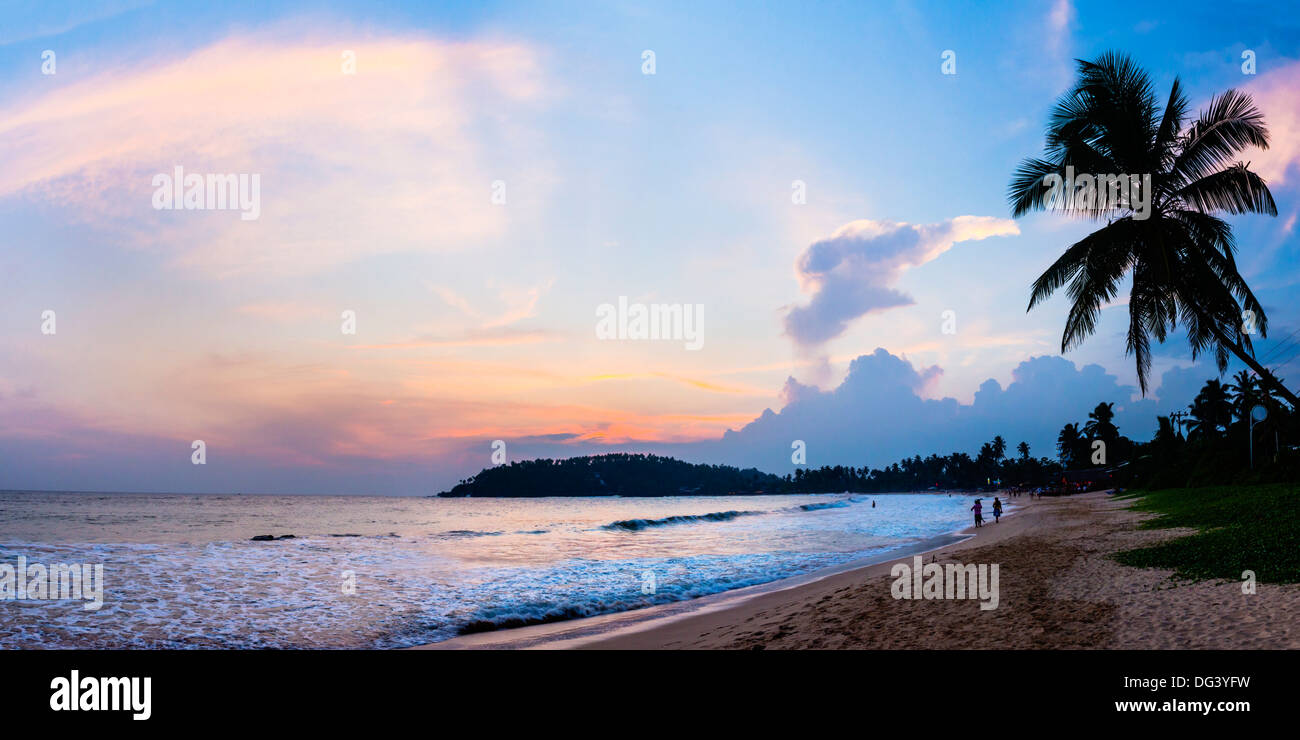Mirissa Beach, palm tree at sunset on the Indian Ocean, South Coast, Southern Province, Sri Lanka, Asia - Stock Image
