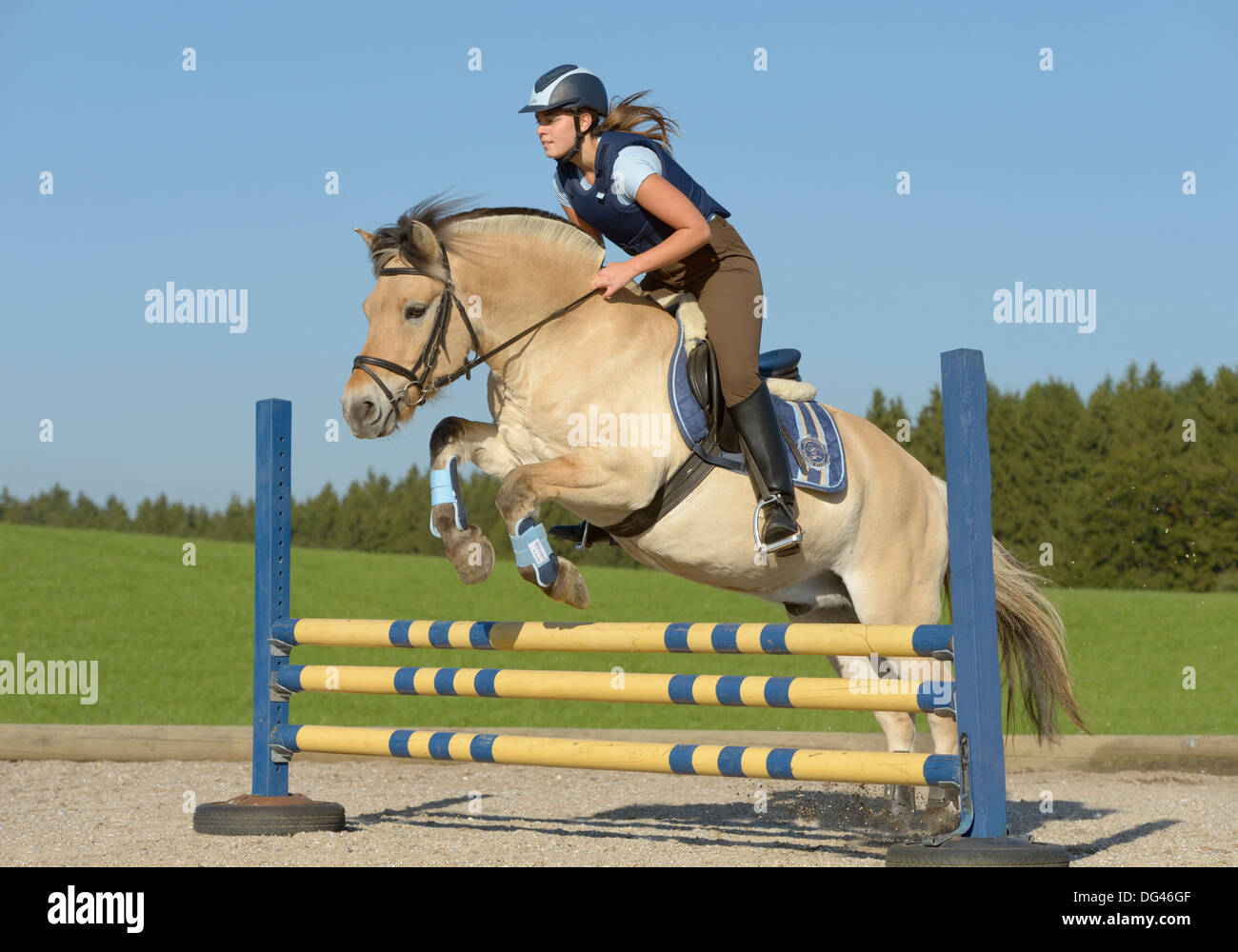 Horse Fjord jumping pictures recommend to wear in on every day in 2019
