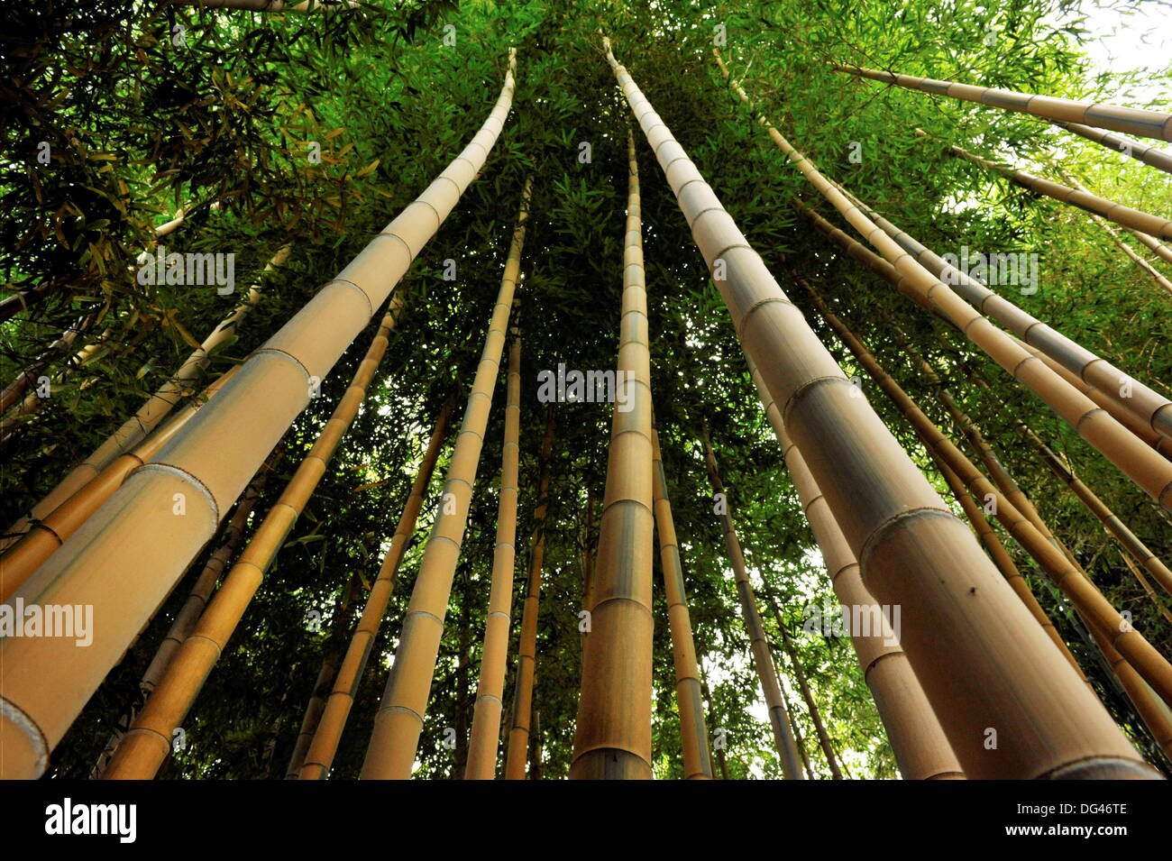 Bamboo Canes Stock Photos & Bamboo Canes Stock Images