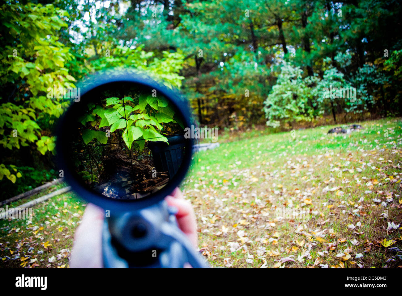 Looking through the sniper's scope into the woods. - Stock Image