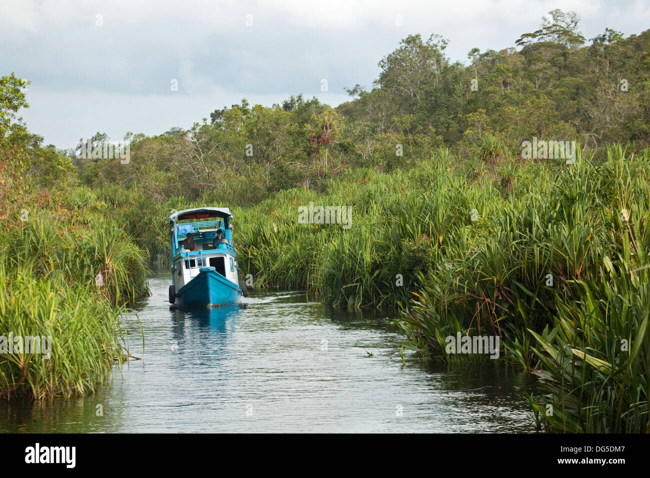 Indonesian klotok, a traditional river boat, on stream lined with Nipa Palms (Nypa fruticans) - Stock Image