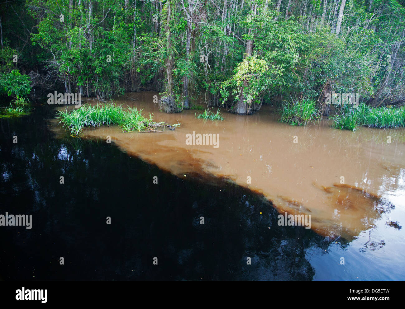 Natural clean black water of the Sekonyer Kanan tributary flowing into muddy water of the main Sekonyer River polluted by illegal gold mining, Borneo - Stock Image