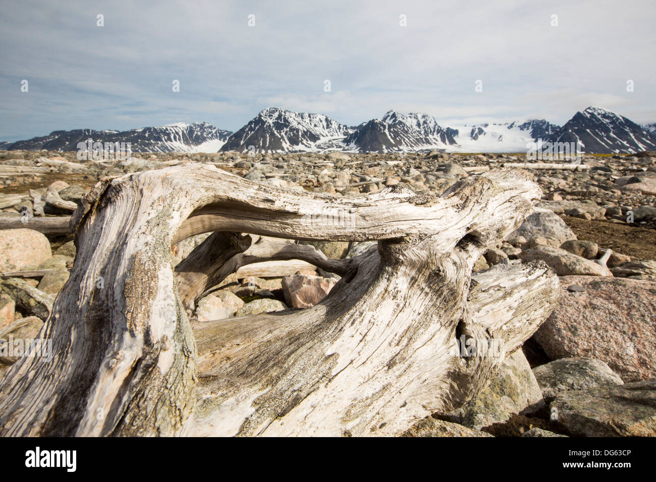 Drift wood from Siberian forests washed up on the shore at Smeerenburg (79°44'n 011°04'e) on northern Svalbard. - Stock Image