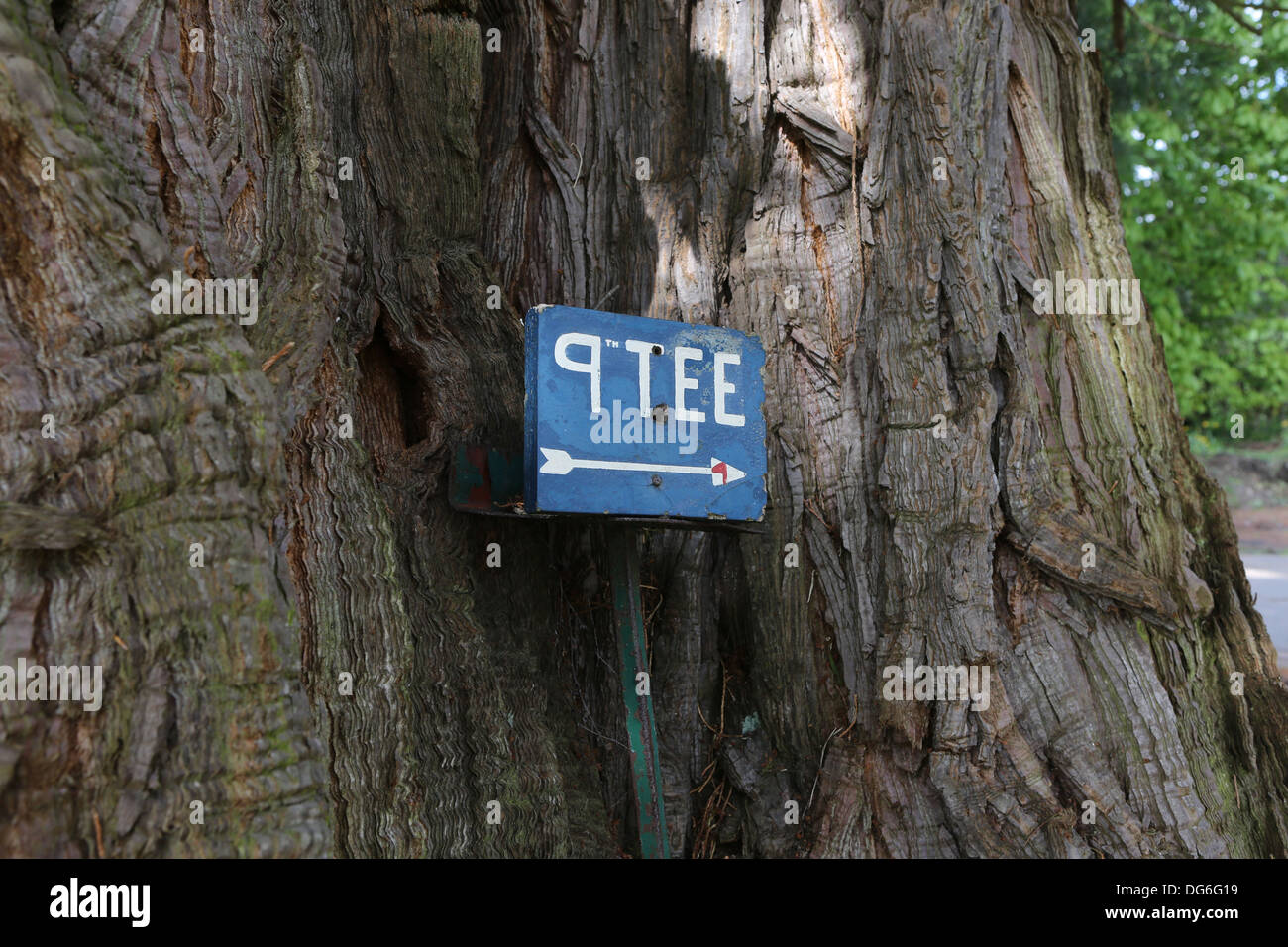 Blue Golf sign pointing the way for the 9th Tee nailed to a tree - Stock Image