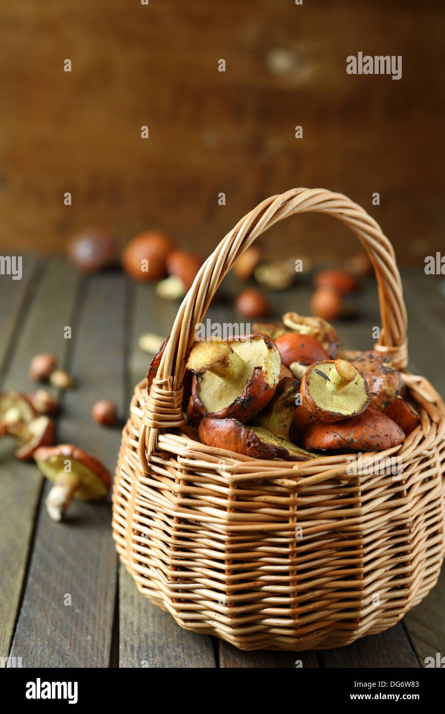 fresh mushrooms gathered in the forest in a basket, food close up - Stock Image