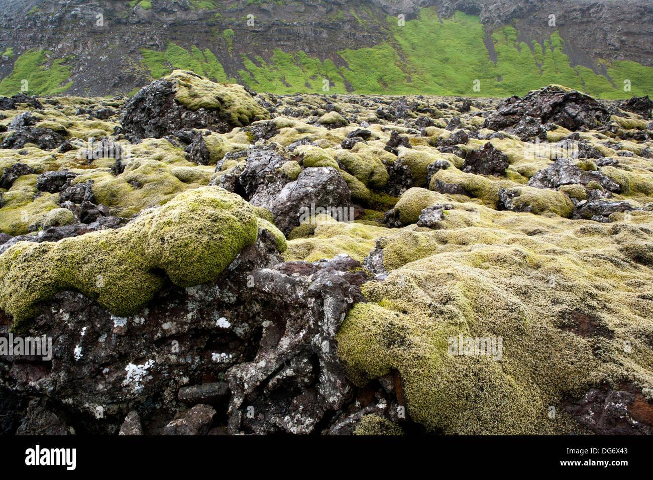 Moss covered lava fields - Reykjanes Peninsula, Southwest Iceland - Stock Image