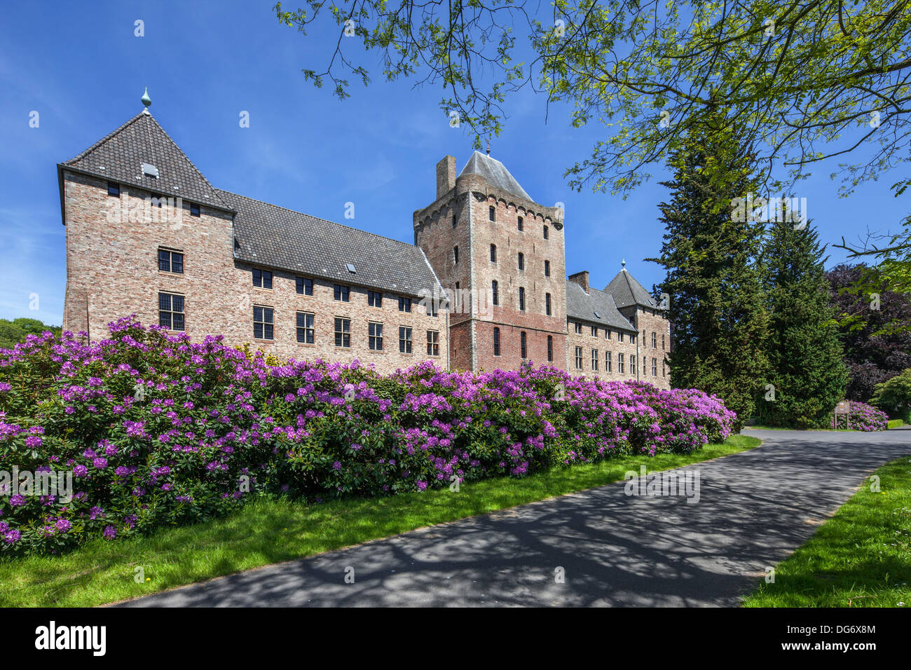 Common / pontic rhododendron (Rhododendron ponticum) flowering in garden of Male Castle, Sint-Kruis near Bruges, Belgium - Stock Image