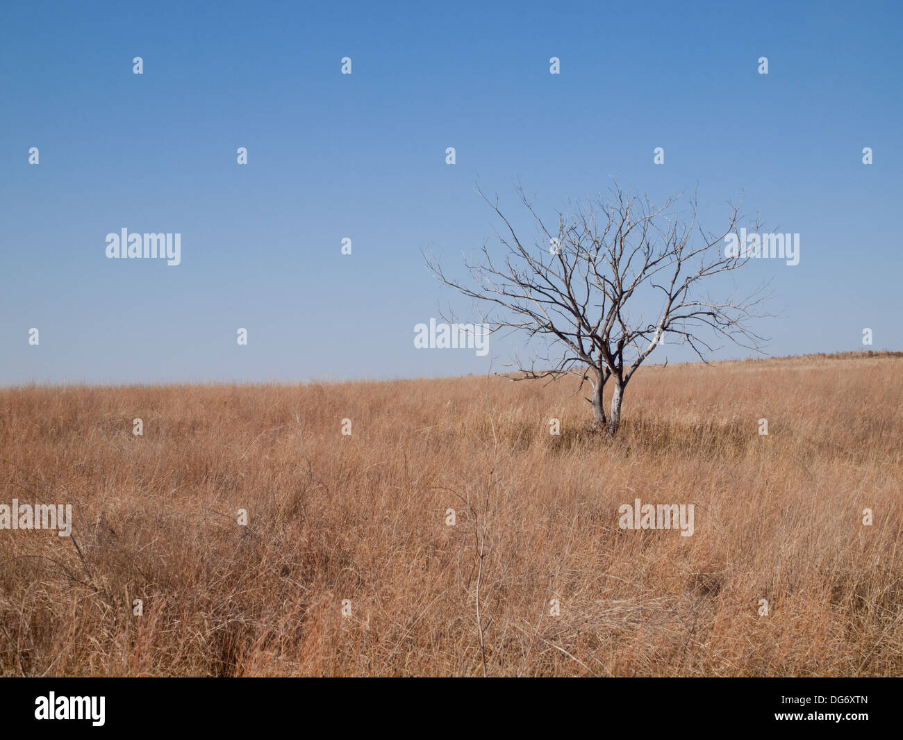 Natural prairie grassland landscape at Beaver Creek Conservation Area near Saskatoon, Saskatchewan, Canada. - Stock Image