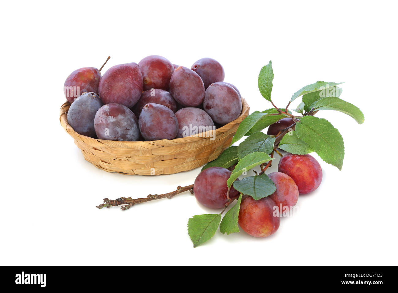 Plums in a wicker basket with a branch isolated on white background Stock Photo