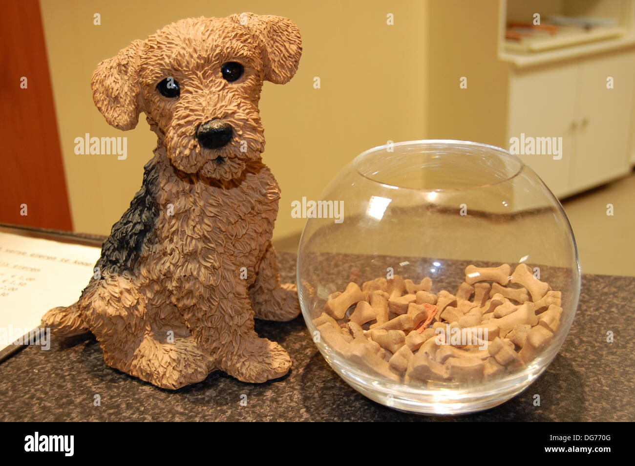 little dog and glass bowl on the counter of vet's practice - Stock Image