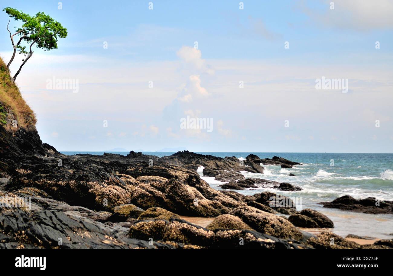 Tropical coastal vegetation, Koh Lanta, Thailand - Stock Image