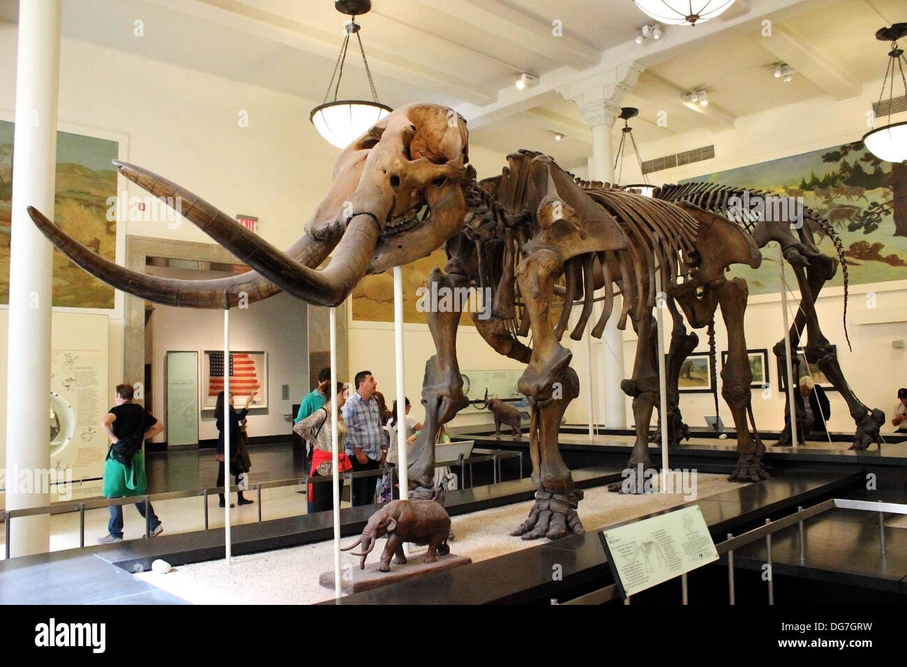 The assembled fossilized remains of a Mastodon is displayed at the American Museum of Natural History in New York City. - Stock Image