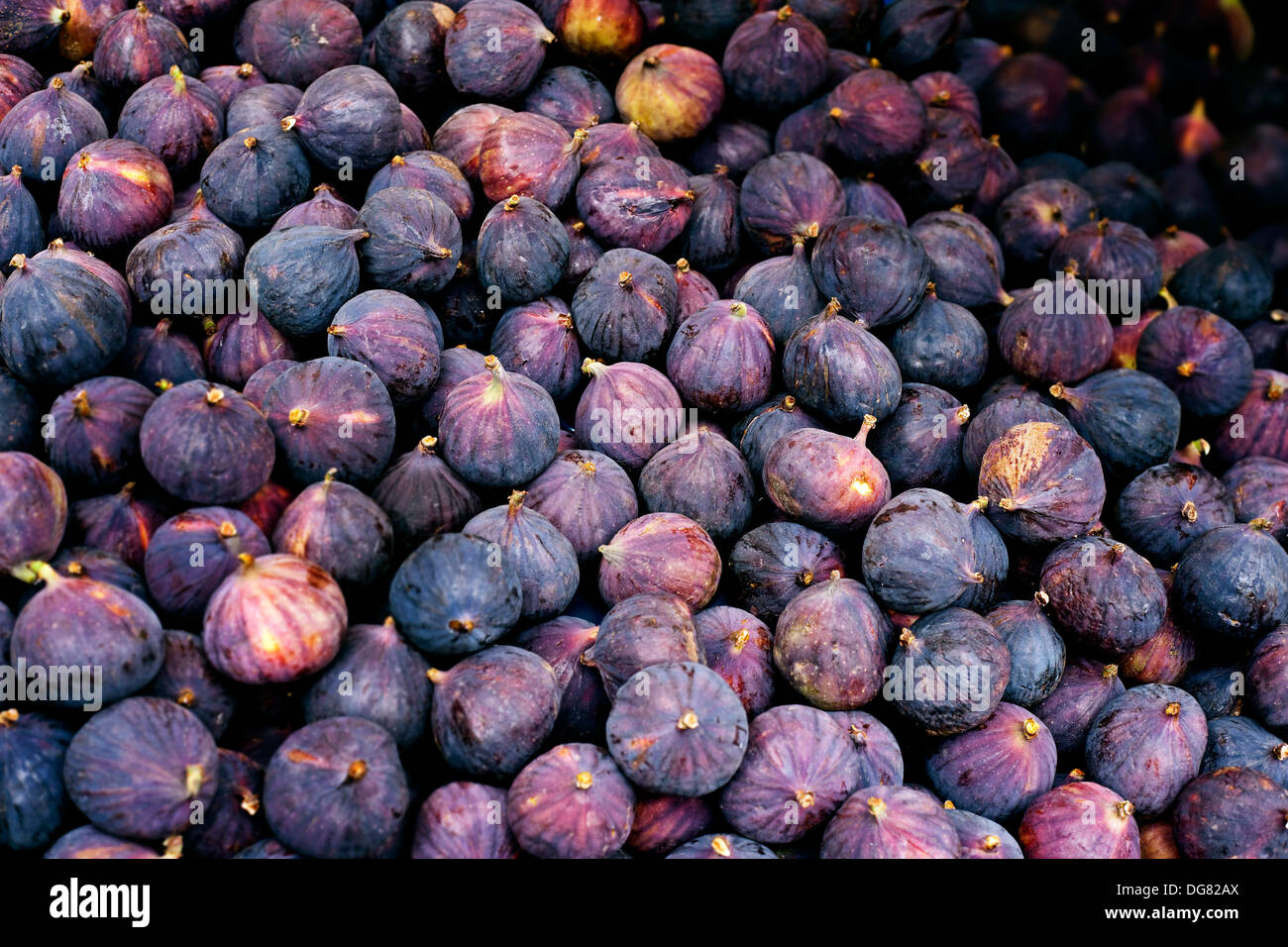 Fresh figs a pile of unopened figs - Stock Image