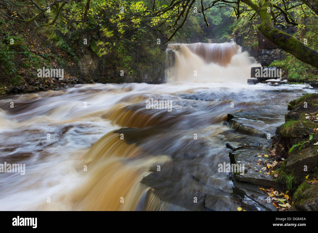 Waterfall on Bowlees Beck (Bow Lee Beck) in Flood Conditions Bowlees Teesdale County Durham UK - Stock Image